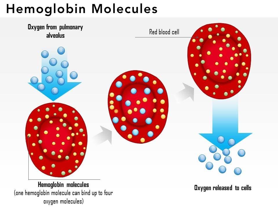 Hemoglobin molecules